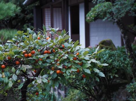 ロウヤガキ1.JPG