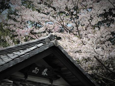 春の春雨亭1.JPG