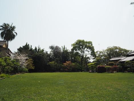 春の穏やかな快晴2.JPG
