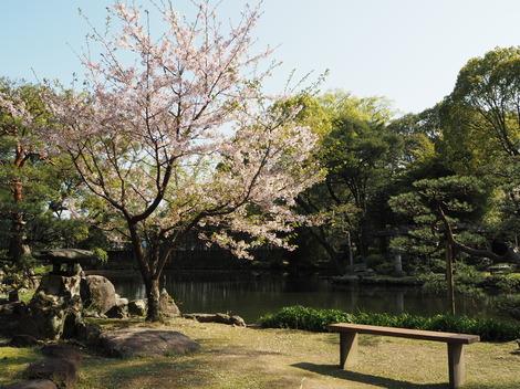春の風景1.JPG