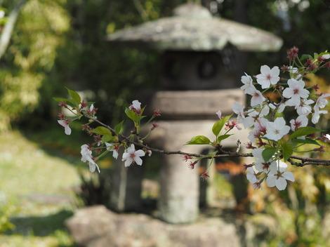 春の風景2.JPG