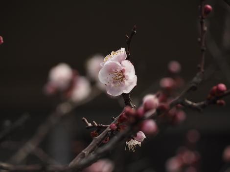 杏子1.JPG