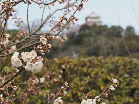 杏子とお城2.JPG