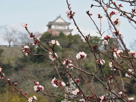 杏子とお城3.JPG