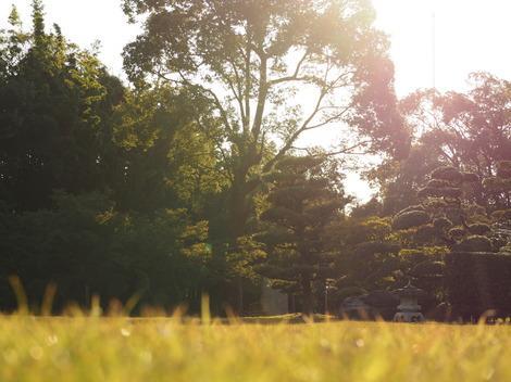 秋の日差し2.JPG
