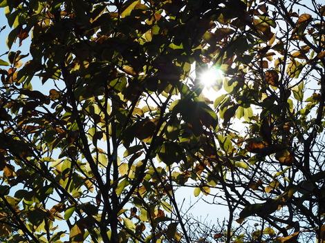 秋の日差し4.JPG