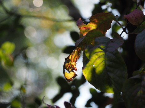 秋の日差し6.JPG