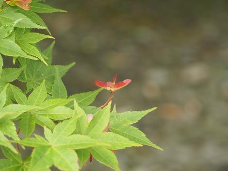 紅葉の花.JPG