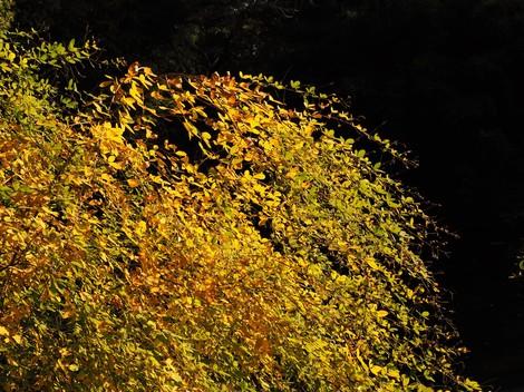 萩の葉.JPG
