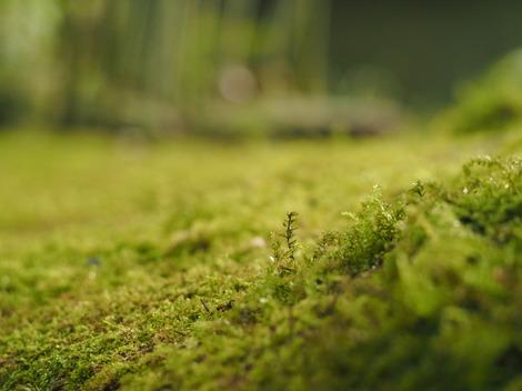 雨上がりの風景2.JPG
