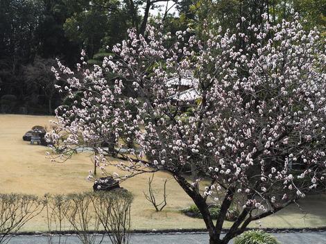 tennshaenn杏子.JPG
